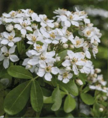 jardin-choisye-ternata